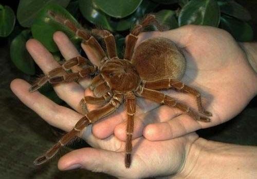 Neuverfilmung tarantula Jungle 2